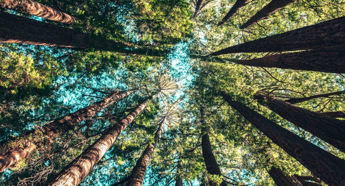 Voynich: la natura al servizio della tua bellezza